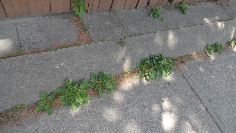 30_donna_sidewalk