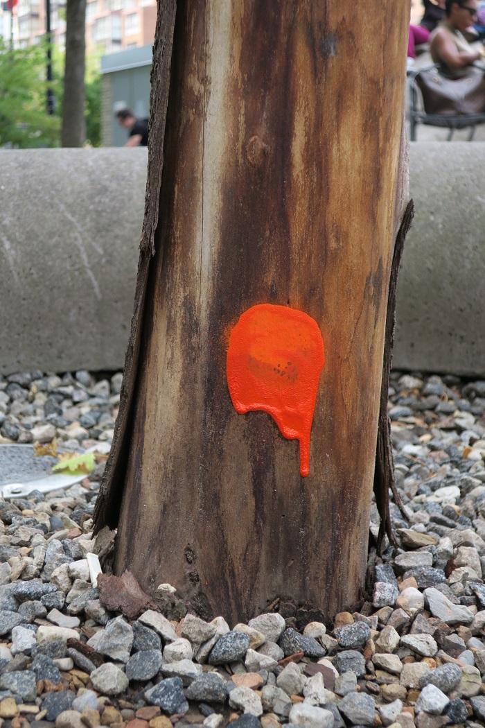 01_sl_orange-paint-on-stump