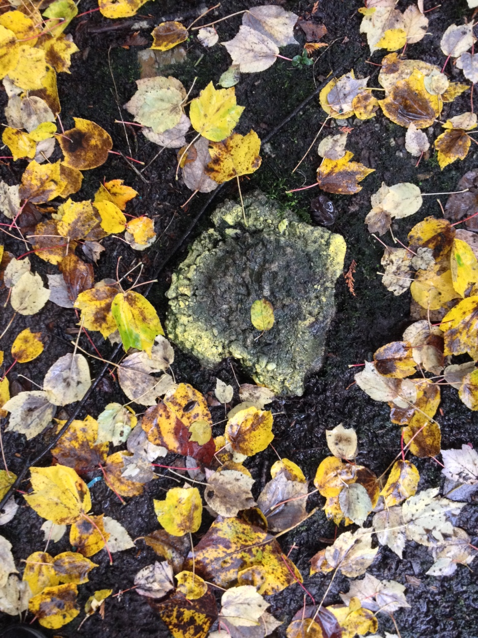 11_leaves_yellowcircle