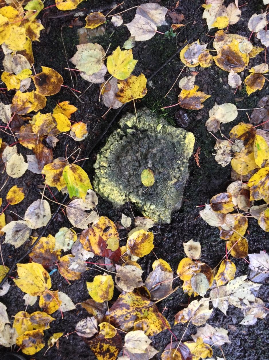 11_leaves_yellowcircle